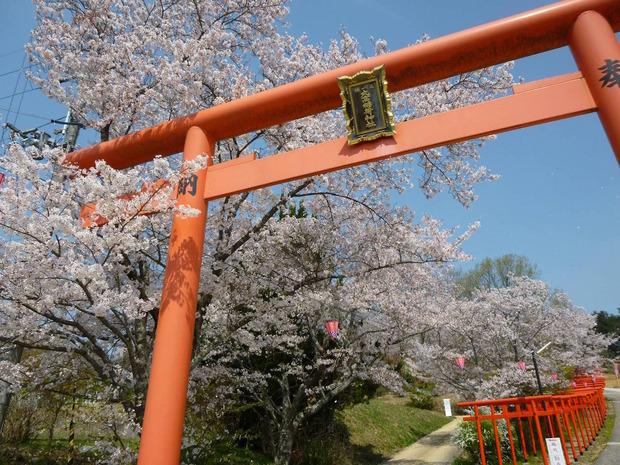 俺がコンデジで撮った桜の写真をうpしてやんよ