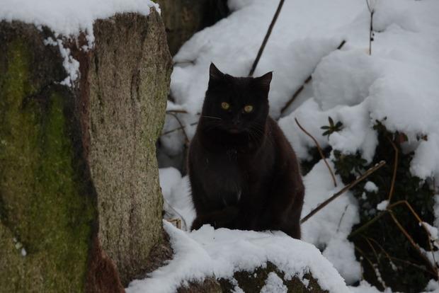 雪と猫、ユキネッコ