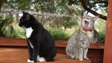 cat-sanctuary-hawaii-2-super-169