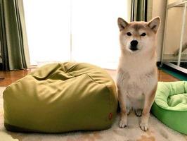 l_miya_1904innumigihook04