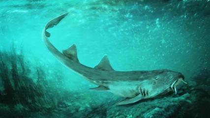 190123_shark-w1280