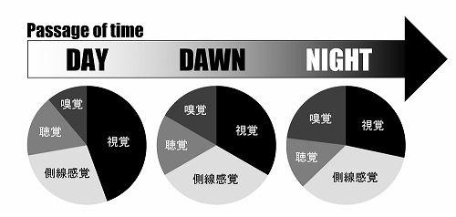 五感円グラフ