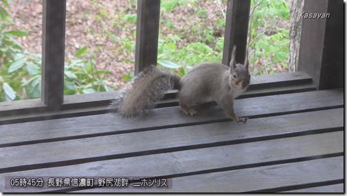 野尻湖リス170503