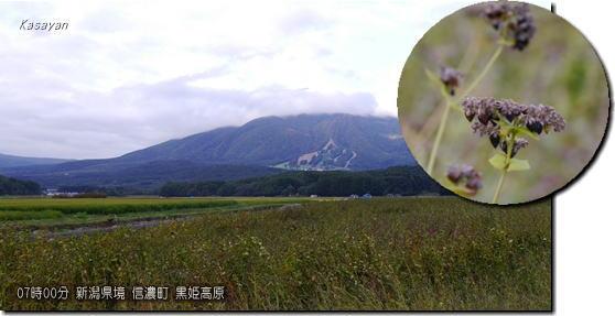 黒姫山そばの実151005