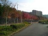 近隣の紅葉