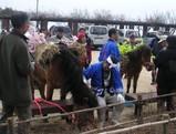 花飾りの馬