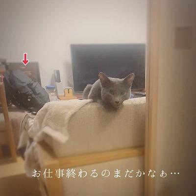 IMG_3194