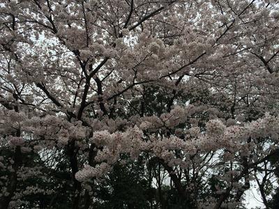 写真 2016-04-03 15 12 09