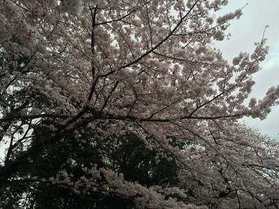 写真 2016-04-03 15 12 14