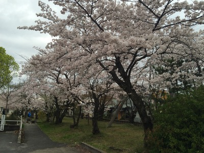写真 2016-04-03 15 10 10