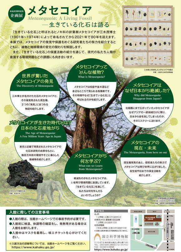 metasequoia2021 (1)-2