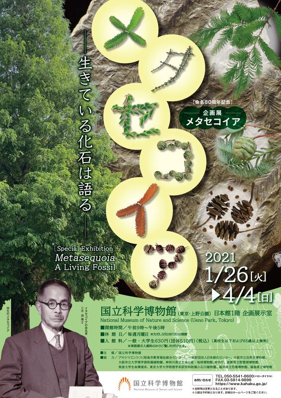 metasequoia2021 (1)-1