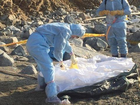 【国際】台湾・無人島で発見の豚死骸、アフリカ豚コレラ陽性 中国から漂着と推定