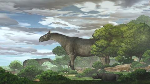 【古生物学】古代の巨大サイ「パラケラテリウム」、新種の化石発見 陸生哺乳類で最大
