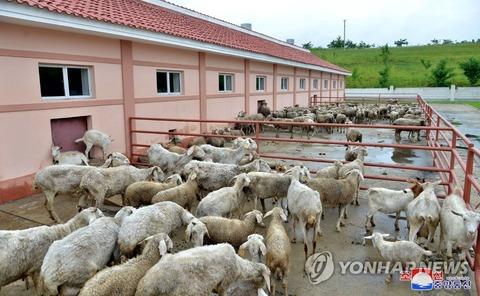 【北朝鮮】繁殖用に羊150頭が欲しい…ロシアに提案