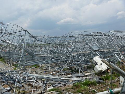 倒壊したビニールハウス