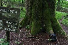 栃の巨木20170625-5