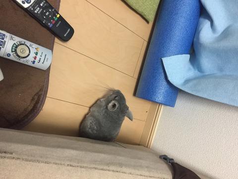kohei_iphone 114