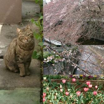 まだ半分位の咲き具合。そしてかわいいネコさん♪