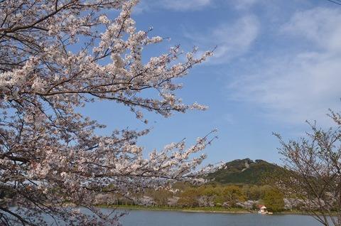 桜(花立山20200404)No20