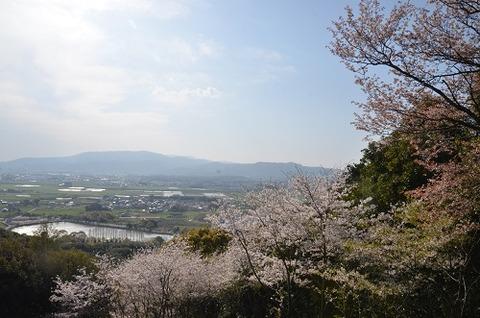 桜(花立山20200404)No6