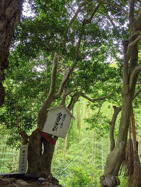 高良山2021612No27