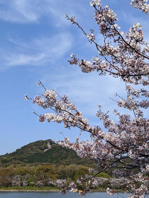 桜(花立山20200404)No21