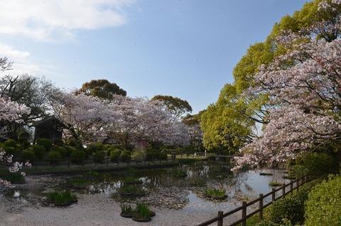 桜(花立山20200404)No19