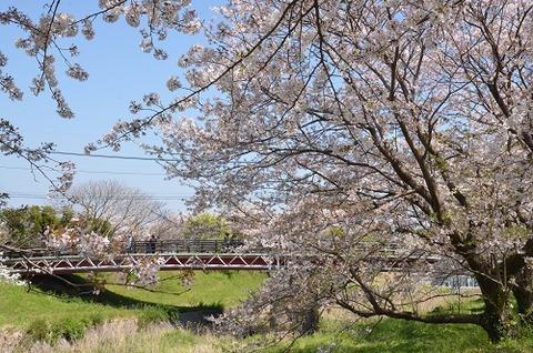 桜(流川20200404)No14