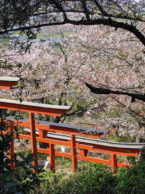 浮羽稲荷神社20200404No33