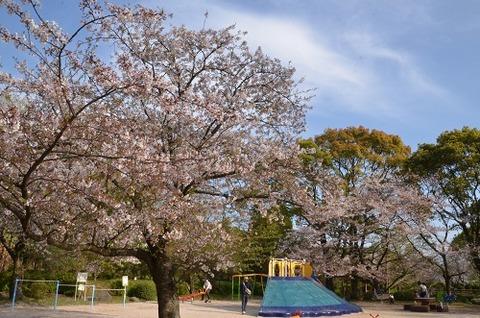 桜(花立山20200404)No14