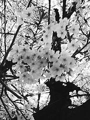 西成の風情〜桜の咲く頃〜 2