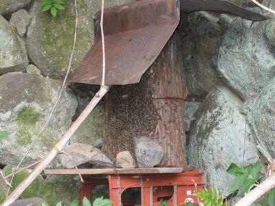 日本ミツバチの巣箱