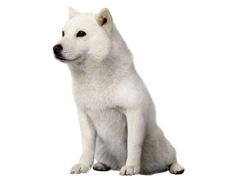 n-dog-a-20180630