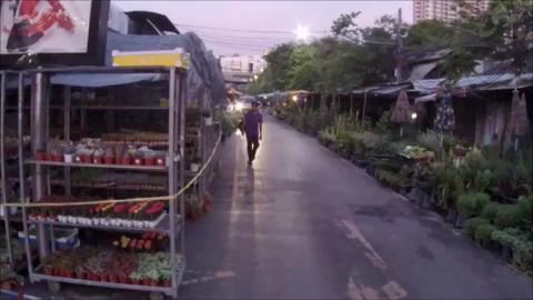 水曜日の夕方の植木市