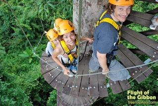 bangkok-pattaya-tours-tree-staircase
