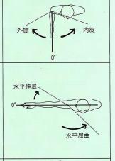 肩の運動2