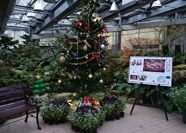 温室のクリスマスツリー、花の文化園クリスマス展