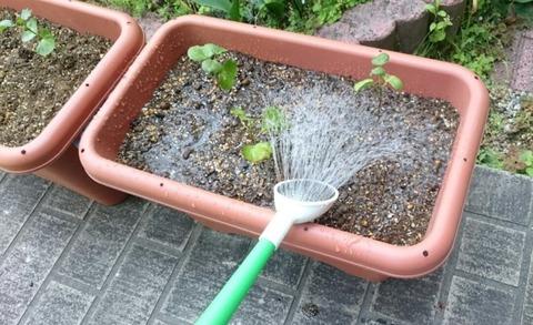 プランターの土にじょうろで水をやる
