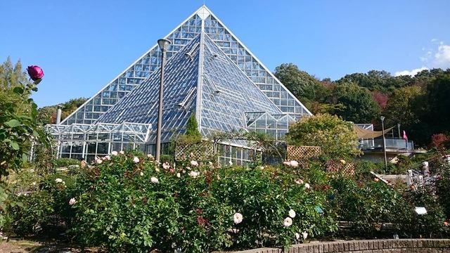 バラ園から見た大温室、花の文化園にて