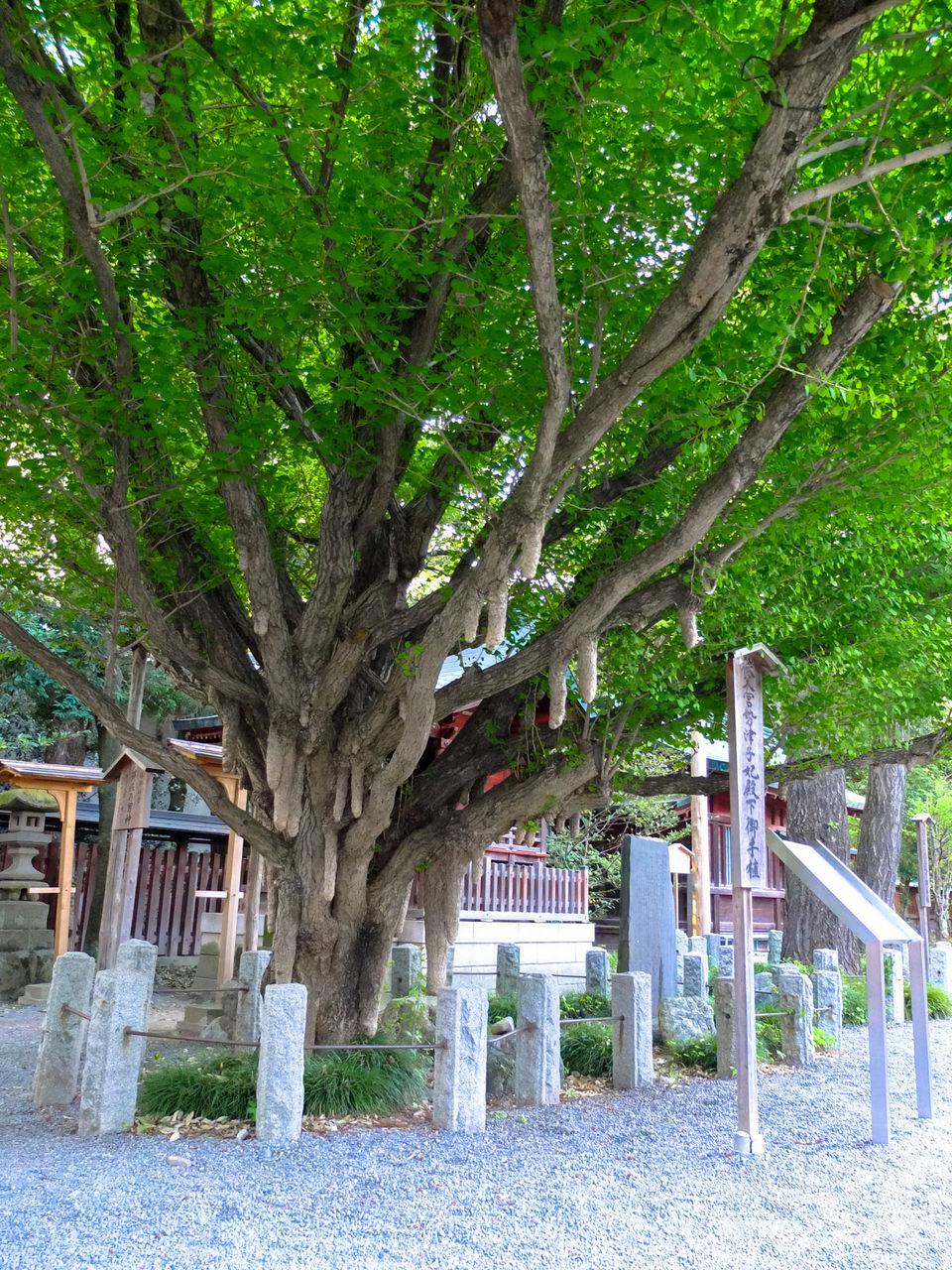 http://livedoor.blogimg.jp/kawagoerider/imgs/2/7/272681e4.jpg