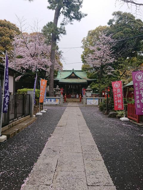 桜①NEW