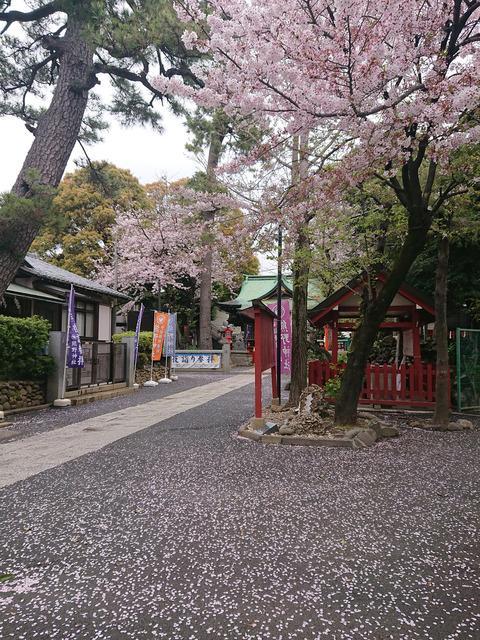桜②NEW
