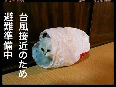 【猫のベッド】台風接近のために避難準備中