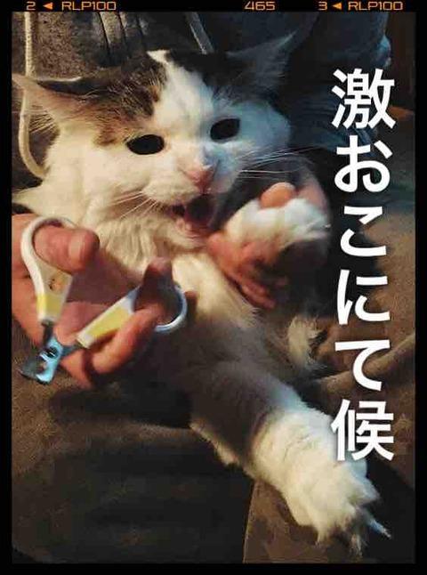【猫グッズDIY】ブラッシング嫌いの猫のために猫おもちゃブラシを作ってみたの巻