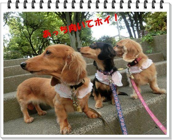 CIMG5133-20121023.jpg