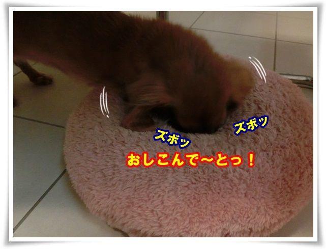 5_20131129112932fec.jpg