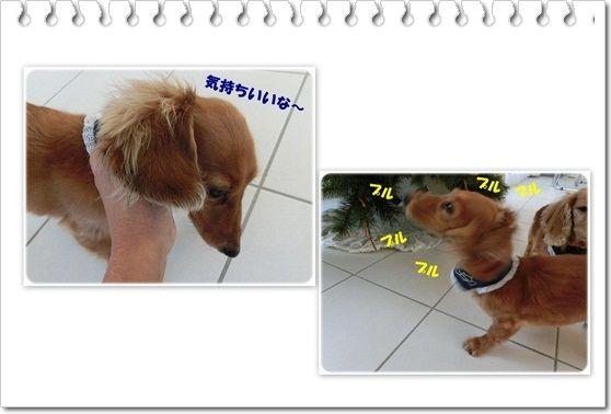 output19-20121210.jpg