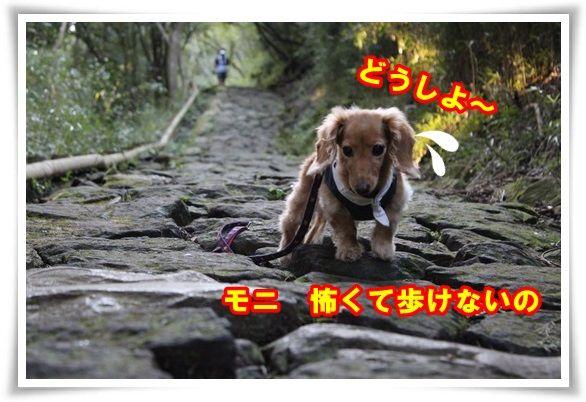 16_20130920102133071.jpg