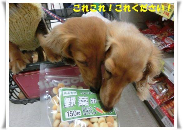 CIMG6152-20121118.jpg